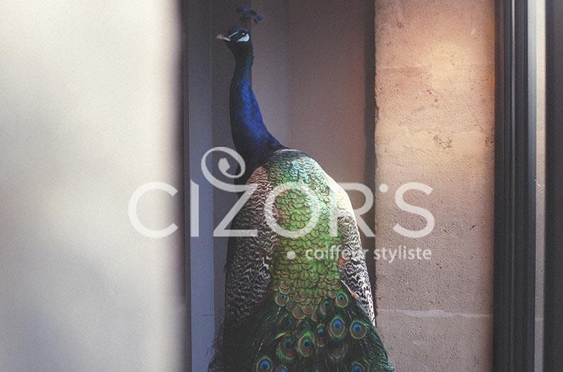 CIZOR'S Coiffeur Visagiste Paris
